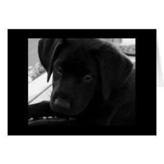 Labrador Retriever Puppy Card