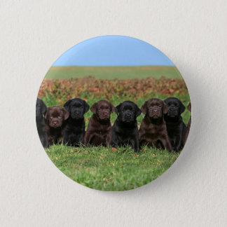 Labrador retriever puppy chocolate and black 6 cm round badge
