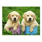 Labrador Retriever Puppy Dog Postcard