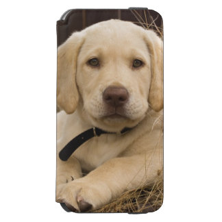 Labrador Retriever puppy Incipio Watson™ iPhone 6 Wallet Case