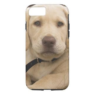 Labrador Retriever puppy iPhone 8/7 Case