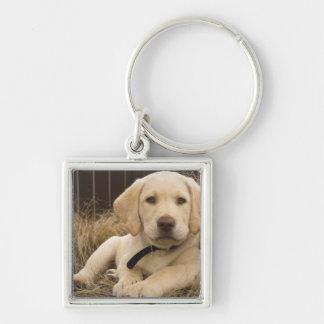Labrador Retriever puppy Key Ring