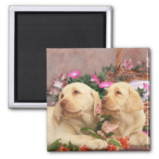 Labrador Retriever puppy magnets