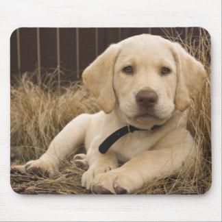 Labrador Retriever puppy Mouse Mat