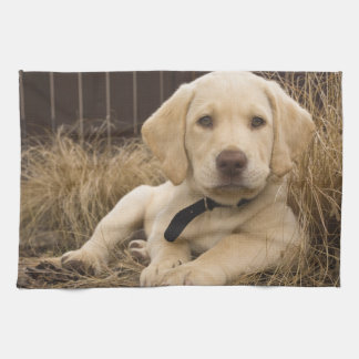 Labrador Retriever puppy Tea Towel