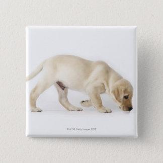 Labrador Retriever Puppy walking 15 Cm Square Badge