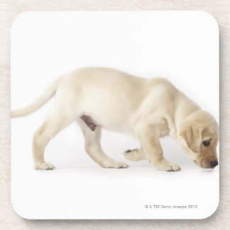 Labrador Retriever Puppy Walking Coaster