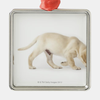 Labrador Retriever Puppy walking, montage Christmas Ornament