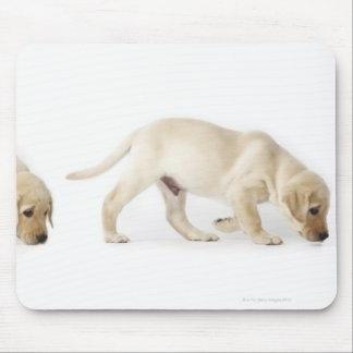 Labrador Retriever Puppy walking, montage Mouse Pad