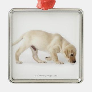 Labrador Retriever Puppy Walking Silver-Colored Square Decoration
