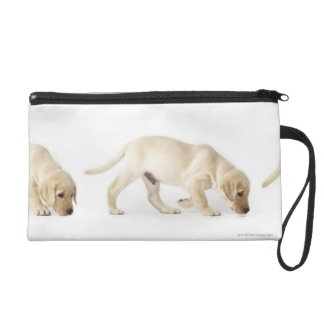 Labrador Retriever Puppy walking Wristlet Clutches