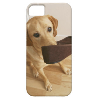 Labrador retriever puppy with slipper in his case for the iPhone 5
