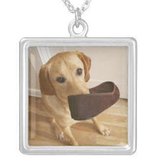 Labrador retriever puppy with slipper in his silver plated necklace
