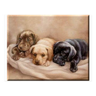 Labrador Retriever Puppy's Postcard