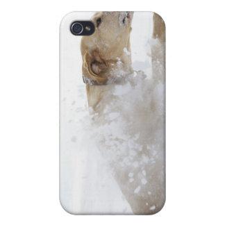 Labrador retriever running through deep snow iPhone 4/4S cases