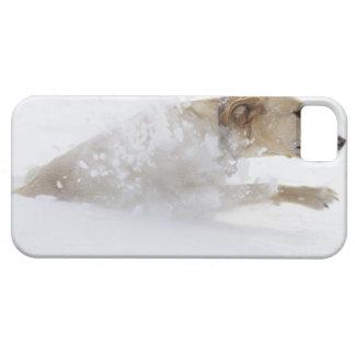Labrador retriever running through deep snow iPhone 5 cover