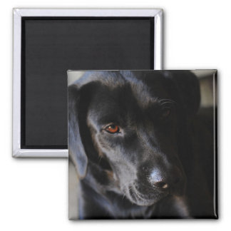 Labrador Retriever Square Magnet