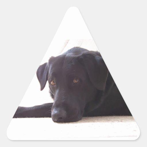 labrador retriever triangle stickers