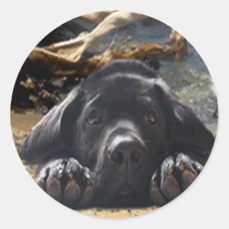 Labrador Retriever Sticker Beach