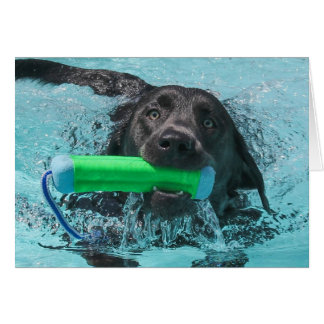 Labrador Retriever Swimming Card