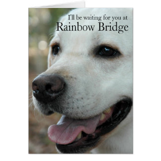 Labrador Retriever sympathy card2 Card