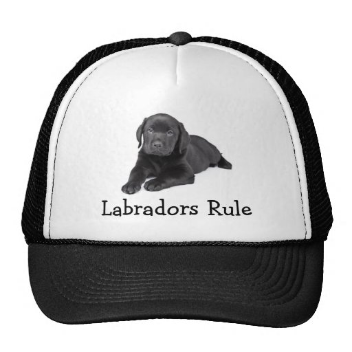 Labrador Retrievers  Rule Puppy Baseball Hat