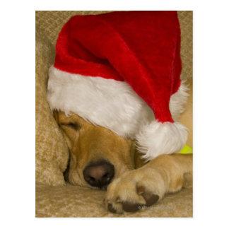 Labrador  wearing a red holiday Santa hat Postcard