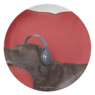 Labrador wearing headphones lying on sofa plate