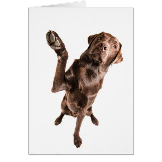 Labrador with a Big High Five Card