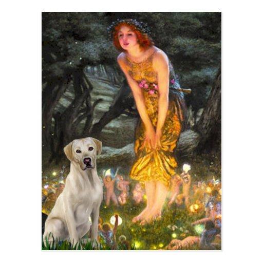 Labrador (Y7) - MidEve Post Card