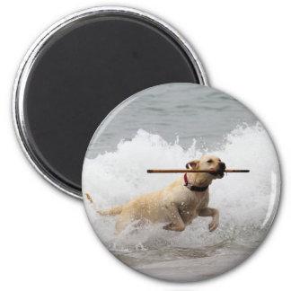Labrador - Yellow - Go Fetch! Magnet