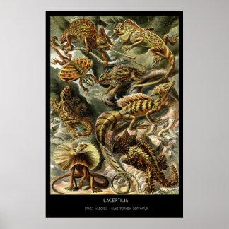 Lacertilia – Plate 79 - Kunstformen der Natur Poster