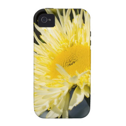 Lacy Daisy iPhone 4/4S Cases