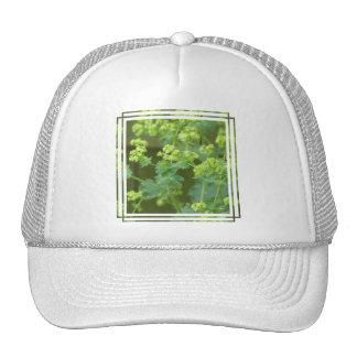 Ladies Mantle Baseball Hat