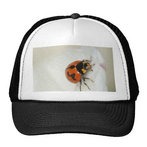 Lady Beetle Climbing High Trucker Hats