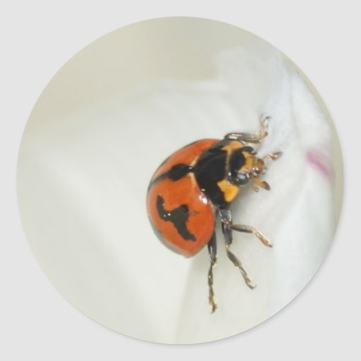 Lady Beetle Climbing High Round Stickers