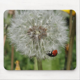 lady beetle - ladybird on dandelion mouse pad