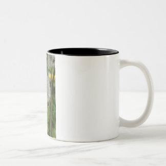 lady beetle - ladybird on dandelion Two-Tone coffee mug