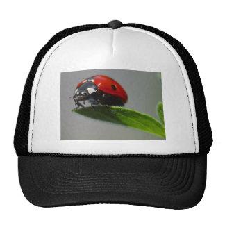 lady bug hats