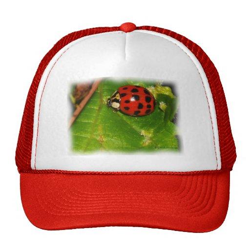 Lady Bug Mesh Hat