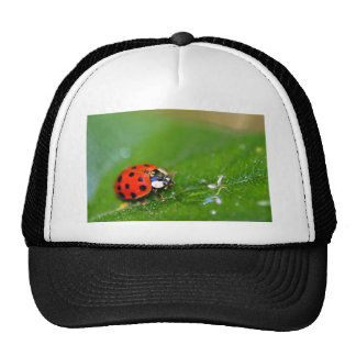 Lady Bug Trucker Hat