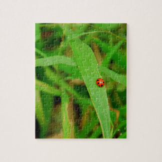 Lady Bug in Grass Puzzles