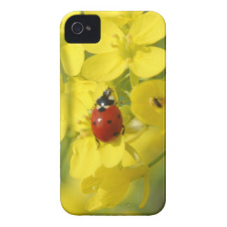 Lady Bug iPhone 4 Cases