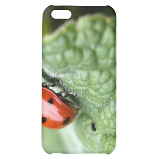 Lady Bug On A Leaf Cover For iPhone 5C