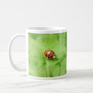 Lady Bug on Feverfew Leaf Basic White Mug