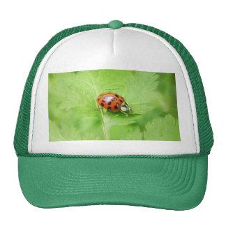 Lady Bug on Feverfew Leaf Cap