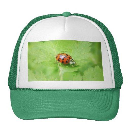 Lady Bug on Feverfew Leaf Hat