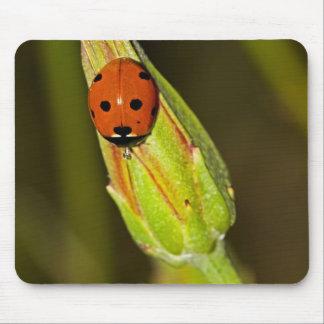 Lady Bug on Flower Bud Mouse Pad