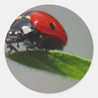 Lady Bug Perched on Leaf Round Sticker