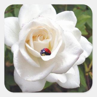Lady_Bug_Rose,_ Square Sticker
